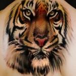 Latest 3D Tiger Tattoos Body Designs 2013-14 for Men 09
